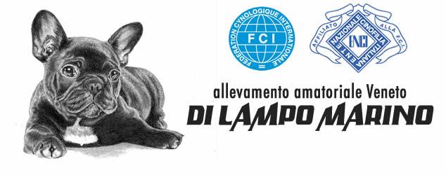 Allevamento Amatoriale Bulldog Francese Veneto – bouledogue francese