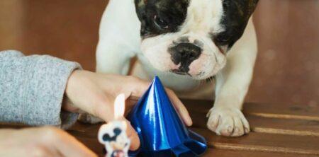 Ansia da separazione, quanto soffre il tuo bulldog francese?